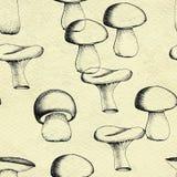 Ręka rysujący bezszwowy wzór z pieczarkami Obraz Stock