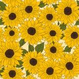 Ręka rysujący deseniowy słonecznika tło Kwiatu żółty brąz Pakować produkty Obrazy Stock