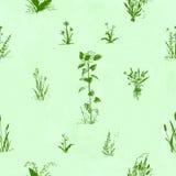 Ręka rysujący doodle kwiaty bezszwowy kwiecisty wzoru Zielony kontur, mlecznozielona akwarela malujący tło Zdjęcie Stock