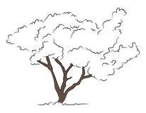 Ręka Rysujący drzewo 1 Zdjęcie Stock