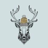 Ręka rysujący dziki rogacz w trykotowej nakrętce Obrazy Royalty Free