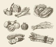 Ręka rysujący karmowy nakreślenie royalty ilustracja