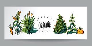Ręka rysujący kolorowego doodle stylu Organicznie naturalny, życiorys, ekologia a Obraz Royalty Free