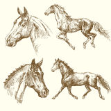 Ręka rysujący konie Obrazy Stock