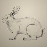 Ręka rysujący królik Obrazy Royalty Free