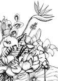 Ręka Rysujący Kwiecisty Naturalny szablon ilustracji