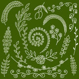 Ręka rysujący kwiecistych elementów ziele i paproci rośliien sylwetki ziele Ogrodowy Dziki ogród Fotografia Stock
