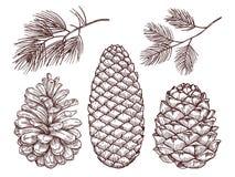 Ręka rysujący lasowy wektor Kreślący sosen pinecones i gałąź ilustracji