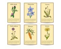 Ręka rysujący leczniczych ziele sprzedaży etykietki sztandary royalty ilustracja