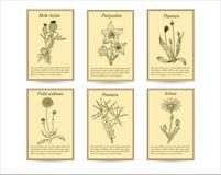 Ręka rysujący leczniczych ziele sprzedaży etykietki sztandary ilustracji