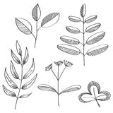 Ręka rysujący liści i gałąź nakreślenia set Fotografia Stock