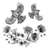 Ręka rysujący monochromatyczny skład roczników ptaki i kwiaty Wiosna ptaki siedzi na okwitnięcie gałąź liniowy ilustracji