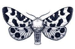Ręka rysujący motyli tatuaż Nierówny motyl Arctia Caja Americana Dotwork tatuaż ilustracja wektor