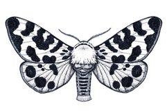 Ręka rysujący motyli tatuaż Nierówny motyl Arctia Caja Americana Dotwork tatuaż royalty ilustracja
