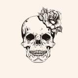 Ręka rysujący nakreślenia scull z róża tatuażu kreskową sztuką Rocznika vecto Zdjęcia Royalty Free