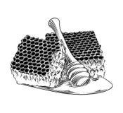 Ręka rysujący nakreślenie honeycomb z drewnianą chochlą w czerni odizolowywającym na białym tle Szczegółowy rocznik akwaforty sty ilustracji