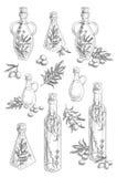 Ręka rysujący nakreślenie - kolekcja oliwa z oliwek butelki z gałązkami oliwnymi i oliwnymi jagodami Fotografia Royalty Free