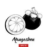 Ręka rysujący nakreślenie mangostan owoc w czerni odizolowywającym na białym tle Szczegółowy rocznik akwaforty stylu rysunek royalty ilustracja