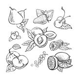 Ręka rysujący nakreślenie owoc set ilustracja wektor