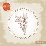 Ręka rysujący nakreślenie stylu arugula liście Wektorowa ilustracja odizolowywająca na starym rocznika tle Zdjęcie Royalty Free