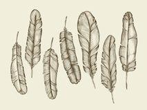 Ręka rysujący nakreślenie upierza, upierzenie, fluff rocznika writing piórko również zwrócić corel ilustracji wektora ilustracji