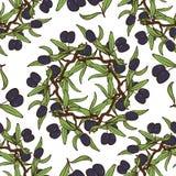 Ręka Rysujący oliwa z oliwek Bezszwowy wzór Obrazy Royalty Free
