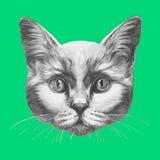 Ręka rysujący portret kot royalty ilustracja