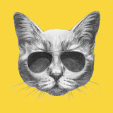 Ręka rysujący portret kot z okularami przeciwsłonecznymi ilustracja wektor