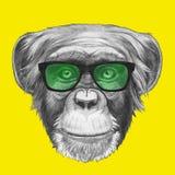 Ręka rysujący portret małpa z szkłami royalty ilustracja