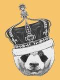 Ręka rysujący portret panda z koroną ilustracji