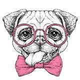 Ręka rysujący rocznika modnisia stylu retro nakreślenie śliczny śmieszny mopsa pies w szkłach również zwrócić corel ilustracji we Obrazy Stock