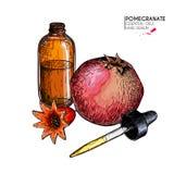 Ręka rysujący set istotni oleje Wektorowy granatowiec i kwiat Leczniczy ziele z szklaną wkraplacz butelką grawerujący Obrazy Royalty Free
