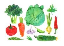 Ręka rysujący set z akwareli warzywami inkasowymi ilustracja wektor