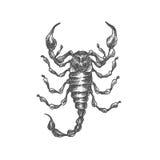 Ręka rysujący skorpion Fotografia Stock