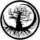 Ręka rysujący stary nagi drzewny koślawy korzeń i gałąź Zdjęcie Stock