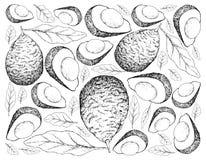 Ręka Rysujący tło Świezi Zieleni Avocados Zdjęcie Stock
