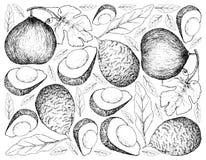 Ręka Rysujący tło Casaba melon i Avocados Obraz Stock