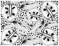 Ręka Rysujący tło Dojrzałe Cherimoya owoc Obrazy Stock
