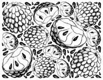 Ręka Rysujący tło Dojrzały Custard Apple ilustracja wektor
