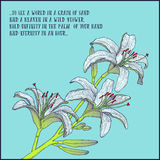 Ręka rysujący tło z białej lelui gałąź również zwrócić corel ilustracji wektora Obrazy Stock