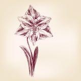 Ręka rysujący tulipan Zdjęcia Royalty Free