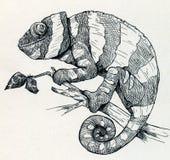 Ręka rysujący uśmiechnięty kameleon Zdjęcia Stock