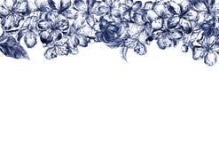 Ręka rysujący węgla drzewnego ołówka obdziergania kwiaty pulm okwitnięcia, liście, płatki i pączki chaotically układający, wewnąt ilustracja wektor