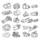 Ręka rysujący warzywo Fotografia Stock