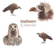 Ręka rysujący watercolo sęp Różni wizerunki ptaka set ilustracja wektor