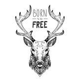 Ręka rysujący wektorowi dzicy lasowi projektów elementy Fotografia Royalty Free