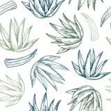 Ręka Rysujący Wektorowy bezszwowy wzór Vera aloesu tła bazy projekt ziołowy ilustracja wektor