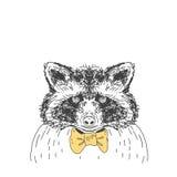 Ręka rysujący wektorowy dziki lasowy jeleni szop pracz Zdjęcia Royalty Free
