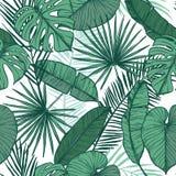Ręka rysujący wektorowy tło - palma opuszcza monstera, areki palma Zdjęcia Stock