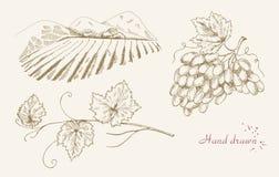 Ręka rysujący winogradu set Obrazy Royalty Free